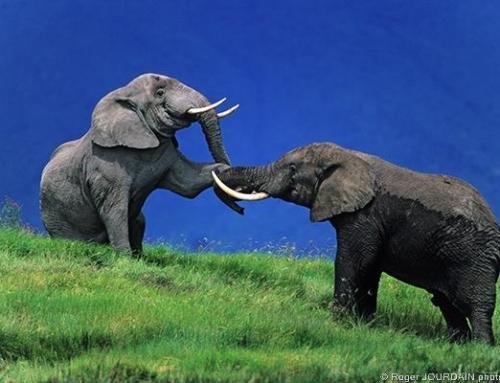 Award-Winning Photos Taken on Safari