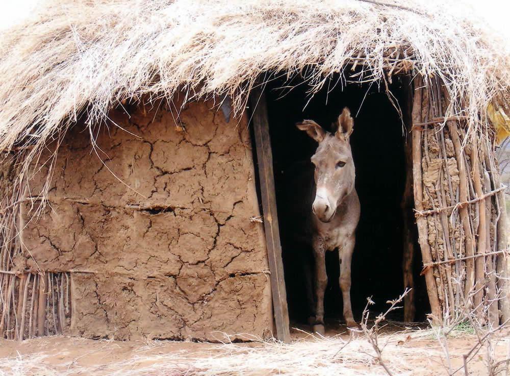 Longido, donkey in doorway