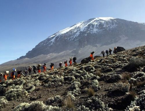 "It's Official! We're ""the Best"" Kilimanjaro Guide Company (according to Trailblazer Guides)"