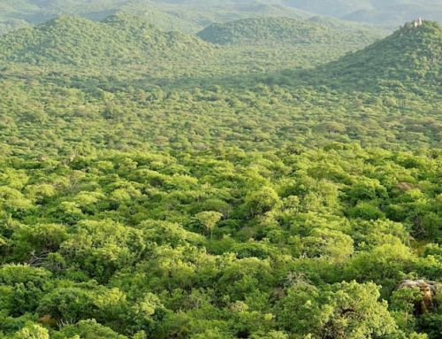 Conservation Continiuum – Our Carbon Offsets Continue To Support Vital Land Conservation In Tanzania